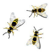 German wasps — Stock Vector