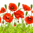 Vector seamless horizontal border with red poppy. — Stock Vector