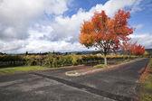 Vineyard Landscape — Stock Photo