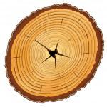 Wooden cross section — Stock Vector