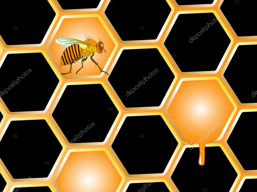 Bee and honey, abstract vector art illustration — Stock Vector #6801010