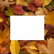 Autumn leaves background with empty greeting card for text — Stock Photo