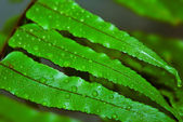 świeże liście z rosy — Zdjęcie stockowe