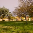 Beautiful park zone in summer at night — Stock Photo #6898870