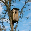 Stock Photo: Starling-house
