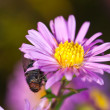 In search of nectar — Stockfoto