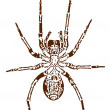 Stock Vector: Vector image of spider