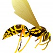 Stock Vector: Vector drawing of wasp