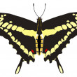 Vector drawing of Papilio machaon — Stock Vector
