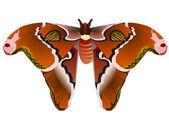 Ilustração em vetor de borboleta saturniidae — Vetorial Stock