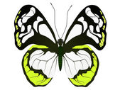 Large white butterfly — Stock Vector