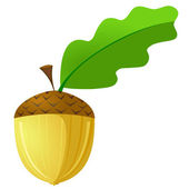 Vector illustration of an acorn is not a white background — Stock Vector