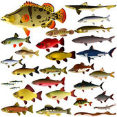 Vector collection of fish — Stock Vector