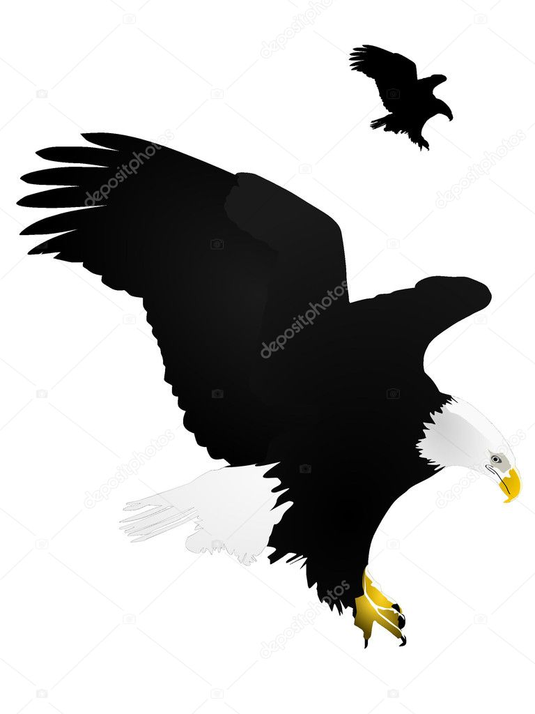 Appealing eagle vector images