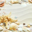 Royalty-Free Stock Photo: Sand background with shells and starfish