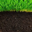 Healthy grass and soil - 