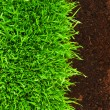 Healthy grass growing in soil pattern — Photo