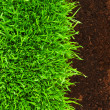 Healthy grass growing in soil pattern — Stock Photo