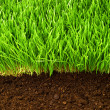 Healthy grass and soil - Lizenzfreies Foto