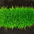 Healthy grass growing in soil pattern - Stockfoto