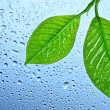 Green leaf with water drops - 