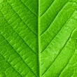 Stock Photo: Green young spring leaf isolated, high resolution macro