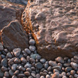 Shining smooth beach stones — Stock Photo
