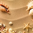 Sea shells with sand as background — Stock Photo #7676911