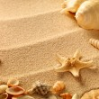 Sea shells with sand as background — Stock Photo #7676967