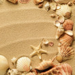 Sea shells with sand as background — Lizenzfreies Foto