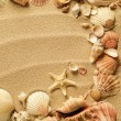 Stock Photo: Sea shells with sand as background