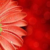 Spring flower background — Stock Photo