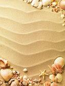 морские раковины с песком как фон — Стоковое фото