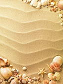 Sea shells with sand as background — Stock fotografie