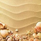 背景としての砂と貝殻 — ストック写真