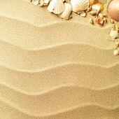 Snäckskal med sand som bakgrund — Stockfoto