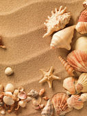 Sea shells with sand as background — Stockfoto
