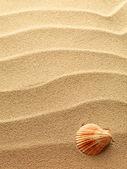 Muszelki z piasku jako tło — Zdjęcie stockowe