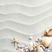Sand bakgrund med snäckor och sjöstjärnor — Stockfoto