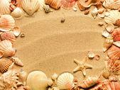 Zeeschelpen met zand als achtergrond — Stockfoto
