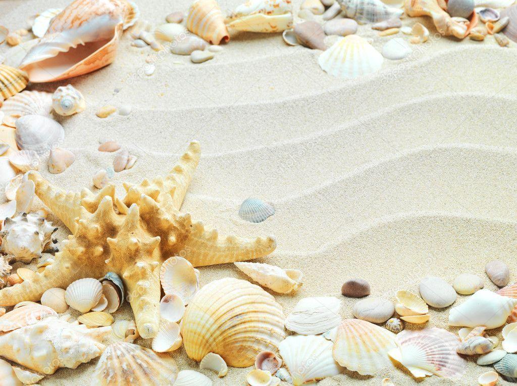 Spiaggia di sabbia con conchiglie e stelle marine foto - Immagini di spongebob e sabbia ...