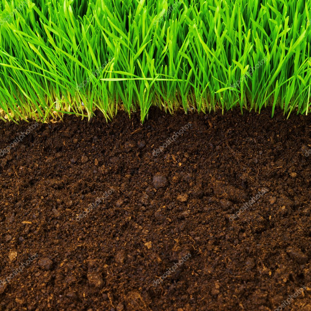 Healthy grass and soil stock photo smaglov 7675557 for Where can i find soil