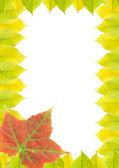 Frame (Autumn leaves) — Stock Photo