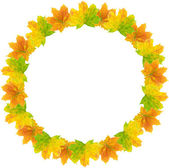 Autumn Leaf Frame — Stock Photo