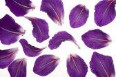 Gladiolus petals — Stock Photo