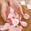 Beautiful hands of the woman and rose petals — Stock Photo