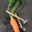 Carrot with garden tools — Stock Photo