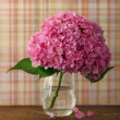 Blossoming pink hydrangea — Stock Photo