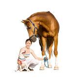 Chestnut horse, dog and girl isolated — Stock Photo