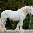 White horse standing — Stock Photo